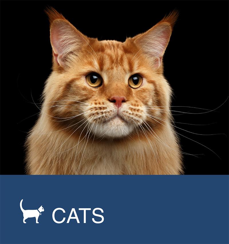 Cats / Feline